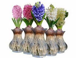 Sự tích hoa dạ lan hương – Hoa tiên ông Truyện cổ tích về các loài hoa