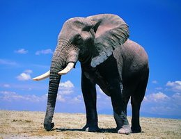 Truyện ngụ ngôn thầy bói xem voi và những bài học ý nghĩa trong cuộc sống