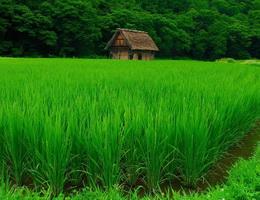Sự tích cỏ và lúa