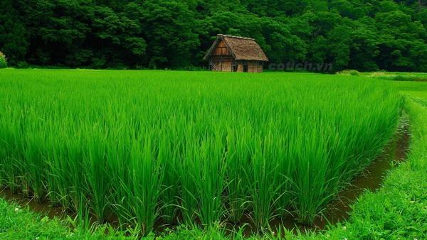 Sự tích cỏ và lúa - Truyện cổ tích dân gian ý nghĩa cho bé