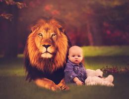 Cậu bé và bức tranh sư tử