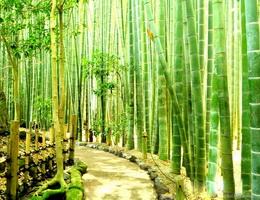 Cuộc đời cây tre – Ba bài học đáng suy ngẫm để thành công