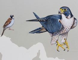 Sự tích chim sẻ và đại bàng