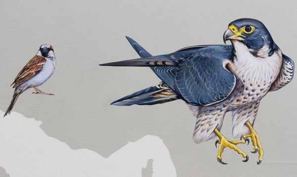Sự tích chim sẻ và đại bàng - Truyện cổ tích thế giới chọn lọc