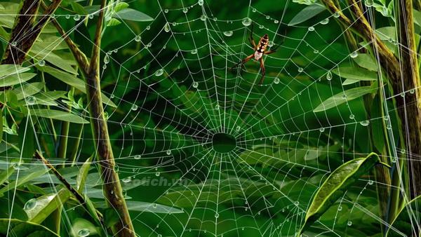 Sự tích con nhện - Truyện cổ tích Philippines chọn lọc