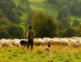 Sự tích người chăn cừu và thợ săn