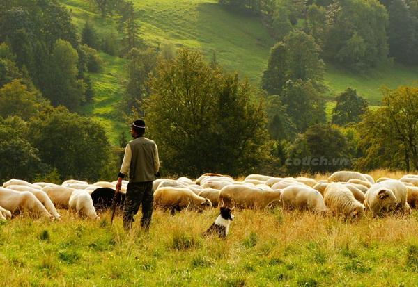 Sự tích người chăn cừu và thợ săn - Bài học ý nghĩa về đối nhân xử thế